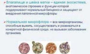 Неизвестная микрофлора матки и ее влияние на успех ЭКО