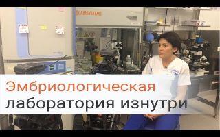 Кто такой эмбриолог и что такое эмбриологический этап в программе ЭКО