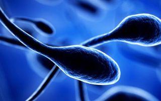 Донорская сперма для ЭКО