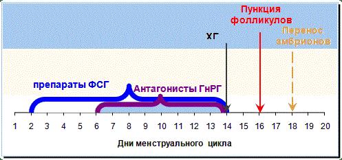 протокол эко